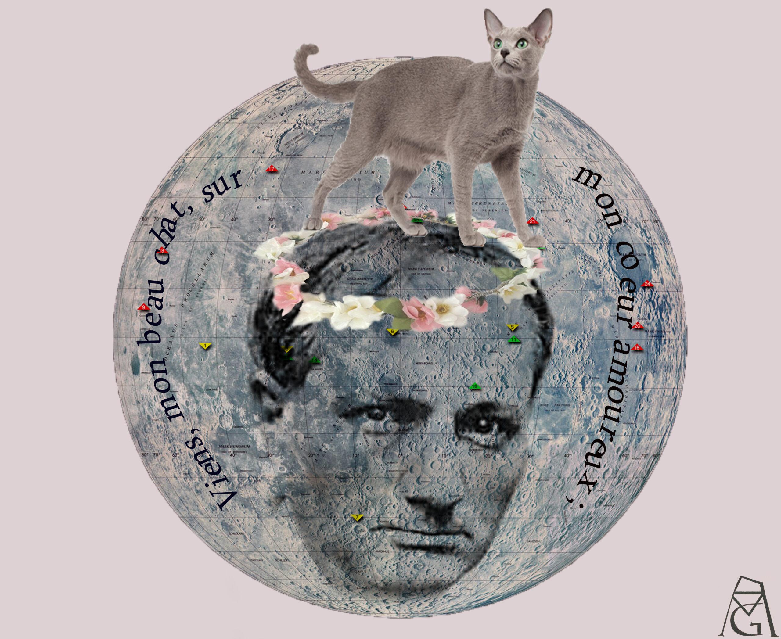 A gata de Baudelaire: breve tentativa de abordar a questão dos direitos dos animais