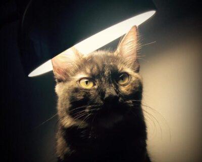 A gata de Paola: breve tentativa de abordar os direitos dos animais (parte 3)