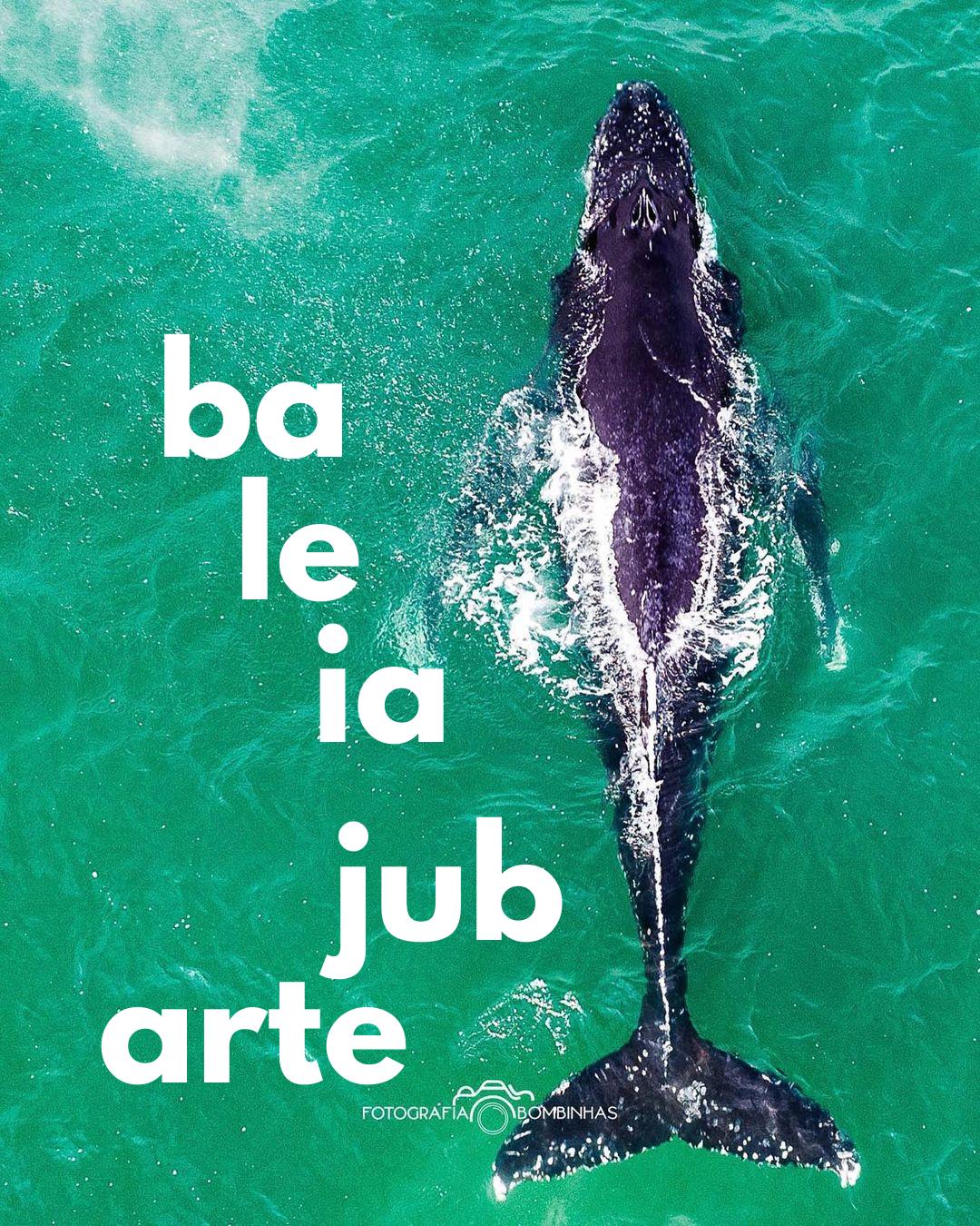 Baleias-jubarte