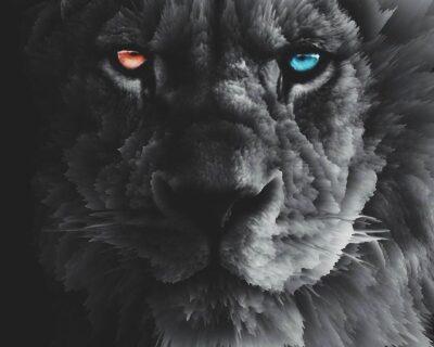 Leão e a Lua